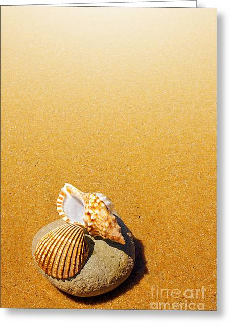 Seashell And Conch Greeting Card by Carlos Caetano