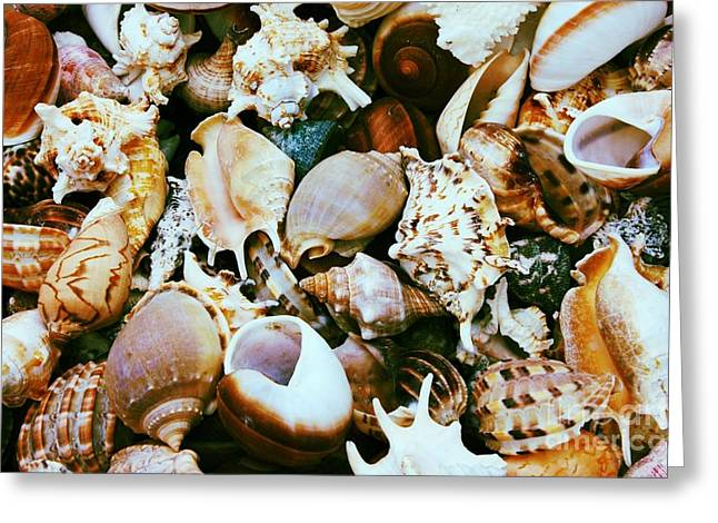 Warm Tones Greeting Cards - Seashells Greeting Card by Carol Groenen
