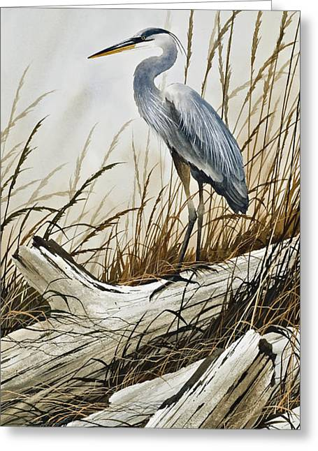 Shore Bird Print Greeting Cards - Secluded Driftwood Shore Greeting Card by James Williamson