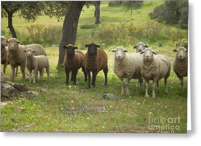 Extremadura Greeting Cards - Sheep in Extremadura Greeting Card by Chani Demuijlder