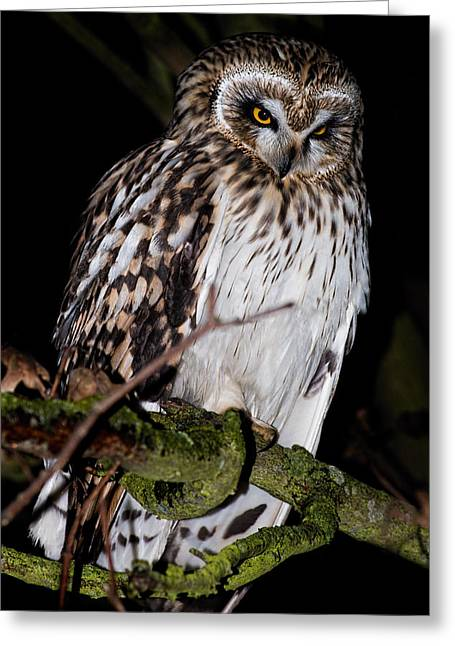 Strigidae Greeting Cards - Short Eared Owl Greeting Card by Ian Hufton