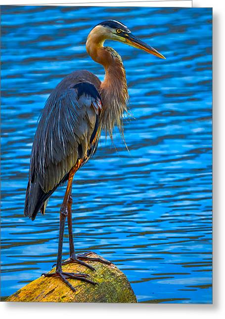 Bird On Tree Greeting Cards - Silent Sentinel Greeting Card by Brian Stevens