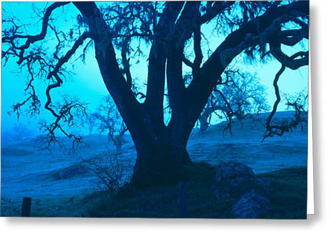 Central Coast Greeting Cards - Silhouette Of Oaks Trees, Central Greeting Card by Panoramic Images