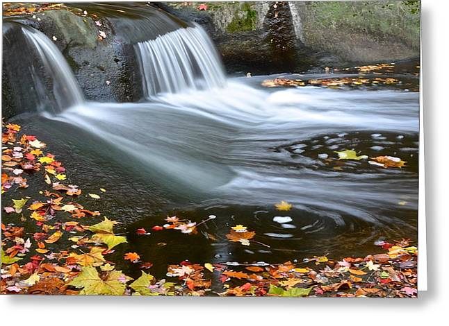 Yahweh Greeting Cards - Simple Elegance Greeting Card by Frozen in Time Fine Art Photography