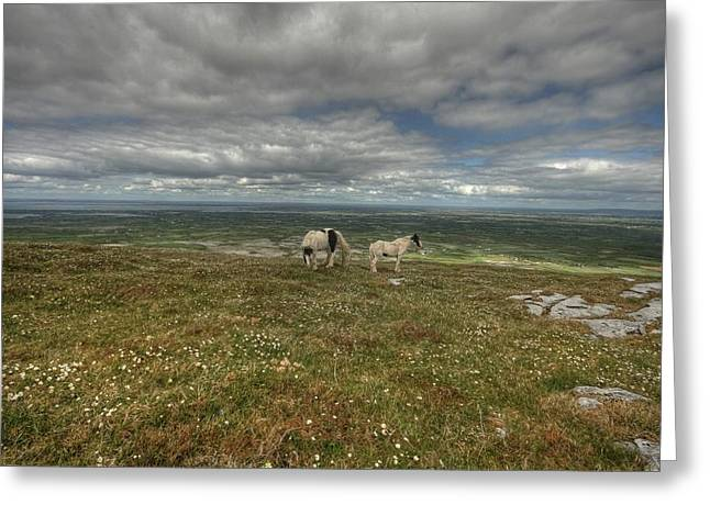 Irish Farm Greeting Cards - Slieve Carran Greeting Card by John Quinn