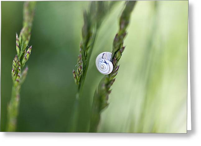 Snail Greeting Cards - Snail on Grass Greeting Card by Nailia Schwarz