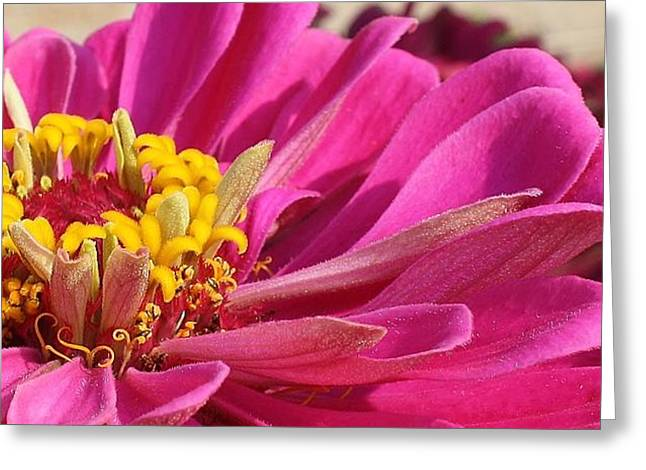 Amatuer Greeting Cards - Sneak a Peek Greeting Card by Bruce Bley