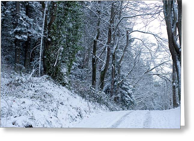 Bare Trees Greeting Cards - Snow Covered Road Passing Greeting Card by Panoramic Images