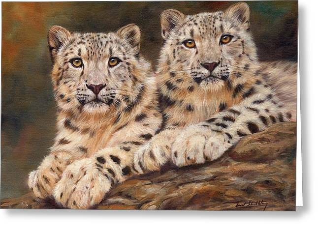 Leopards Greeting Cards - Snow Leopards Greeting Card by David Stribbling