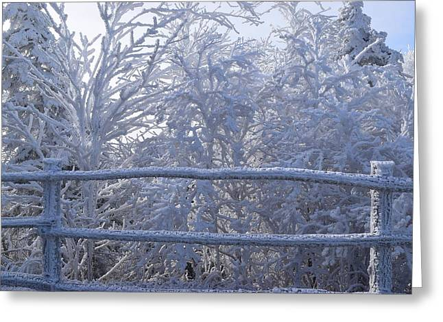 Gatlinburg Tennessee Greeting Cards - Snowy Forest Greeting Card by Curtis Krusie