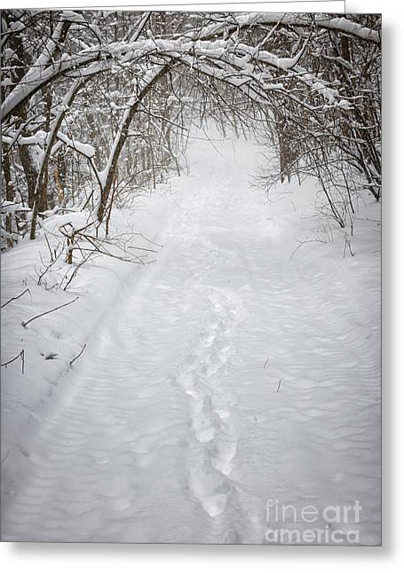 Seasonal Prints Rural Prints Greeting Cards - Snowy winter path in forest Greeting Card by Elena Elisseeva