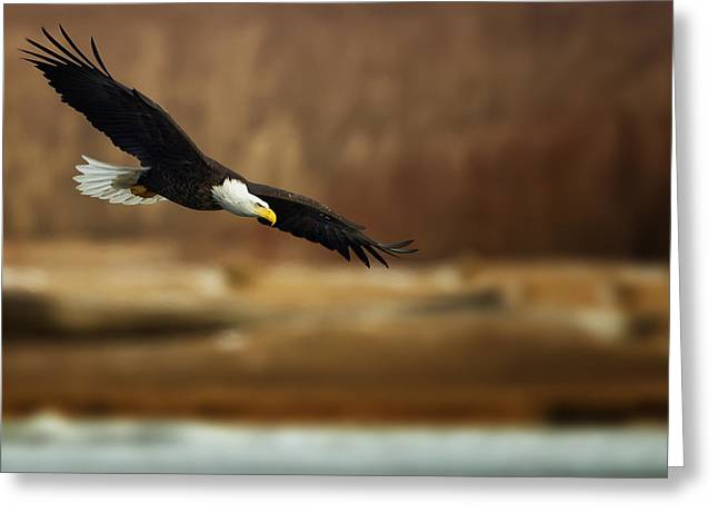 Sharp Claws Greeting Cards - Soaring Bald Eagle Greeting Card by Al  Mueller