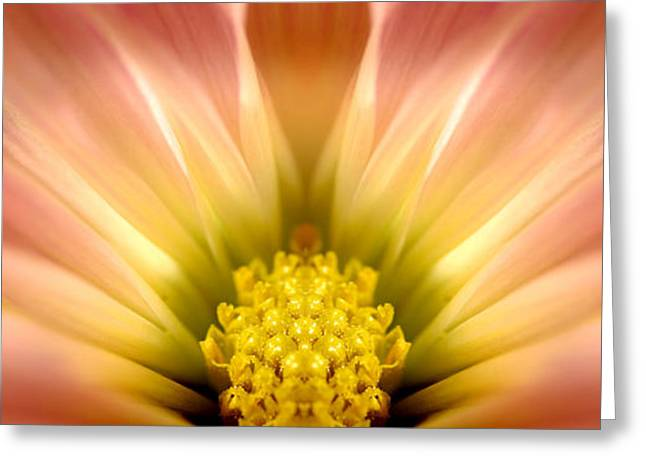 Light Magnifications Greeting Cards - Soft Flower Greeting Card by Lane Erickson