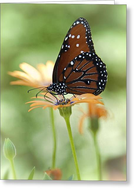 Queen Butterfly Greeting Cards - Softly Spoken  Greeting Card by Saija  Lehtonen
