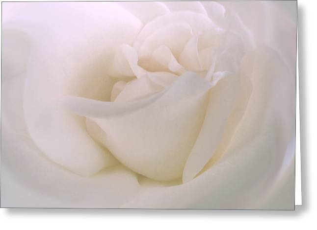 Closeup Greeting Cards - Softness of a White Rose Flower Greeting Card by Jennie Marie Schell