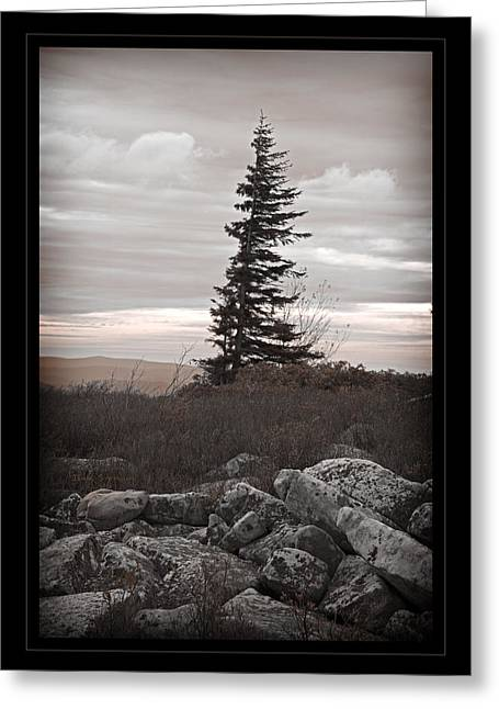 Dolly Sods Wilderness Greeting Cards - Solitary Solitude Greeting Card by John Stephens