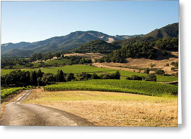California Vineyard Greeting Cards - Sonoma Valley Greeting Card by Clay Townsend