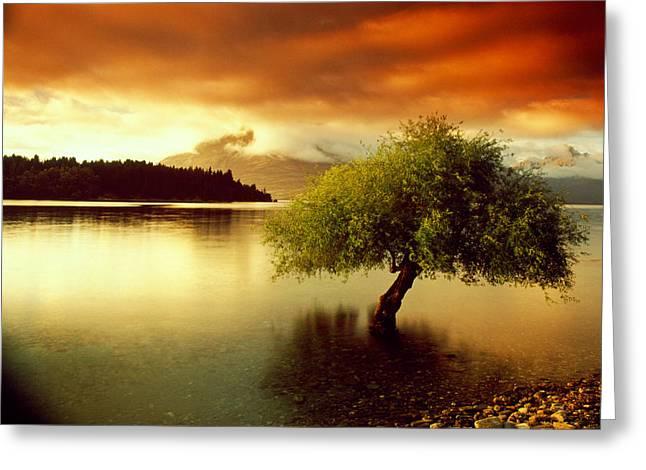 Floods Greeting Cards - South Island New Zealand Greeting Card by Panoramic Images