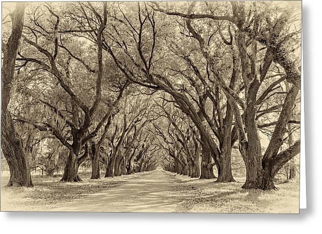 Evergreen Plantation Photographs Greeting Cards - Southern Journey sepia Greeting Card by Steve Harrington
