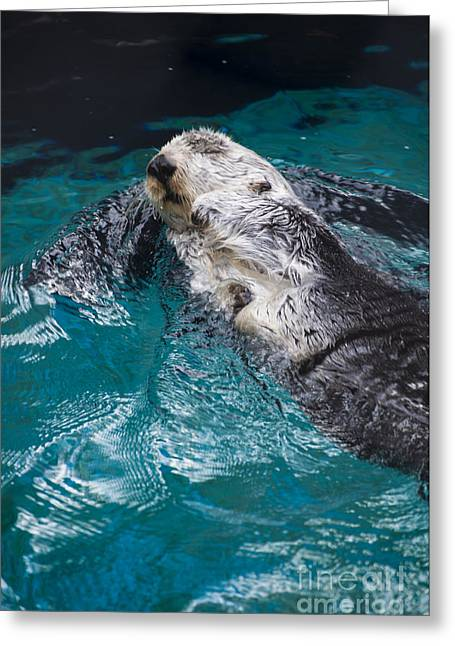 Sea Greeting Cards - Southern Sea Otter Greeting Card by Mandy Judson
