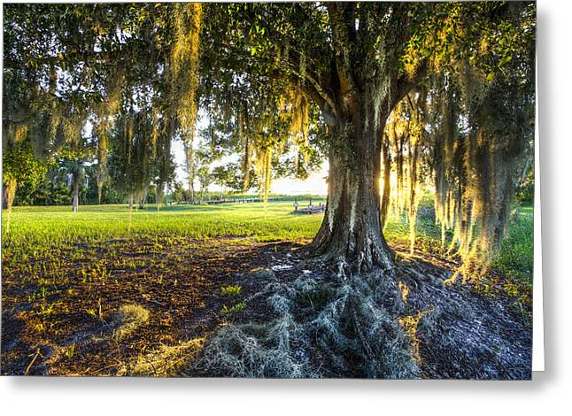 Oak Hammocks Greeting Cards - Spanish Moss Greeting Card by Debra and Dave Vanderlaan