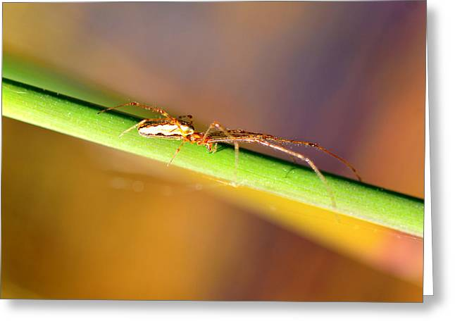 Metallica Greeting Cards - Spider in the reeds Greeting Card by Toppart Sweden