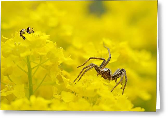Spider Flower Greeting Cards - Spider Greeting Card by Jaroslaw Grudzinski