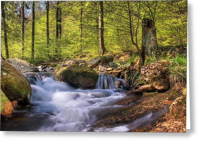 Forest Pyrography Greeting Cards - Spring at Ilsetal Greeting Card by Steffen Gierok