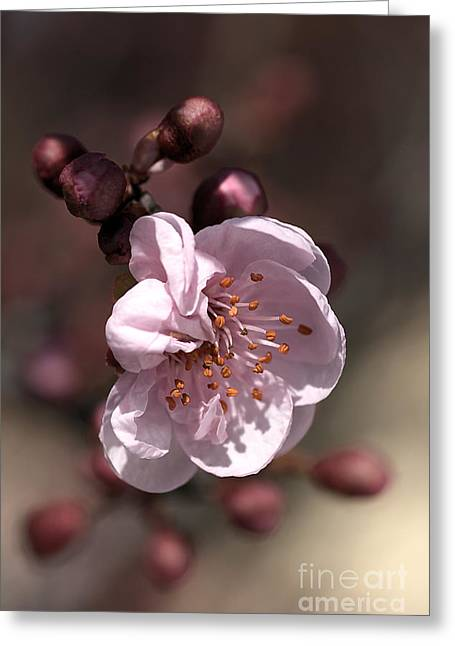Joy Watson Greeting Cards - Spring Blossom Greeting Card by Joy Watson