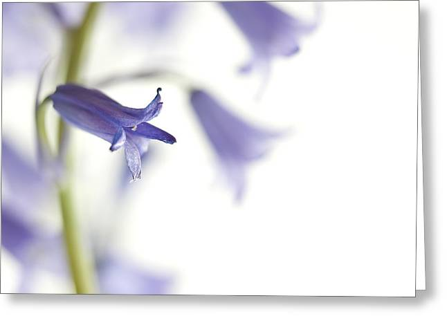 Spring Bluebells Greeting Card by Carol Leigh