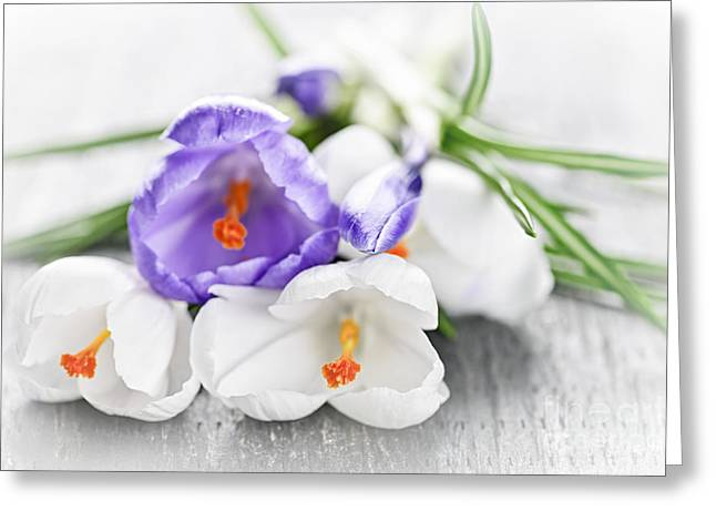 Flowering Greeting Cards - Spring crocus flowers Greeting Card by Elena Elisseeva