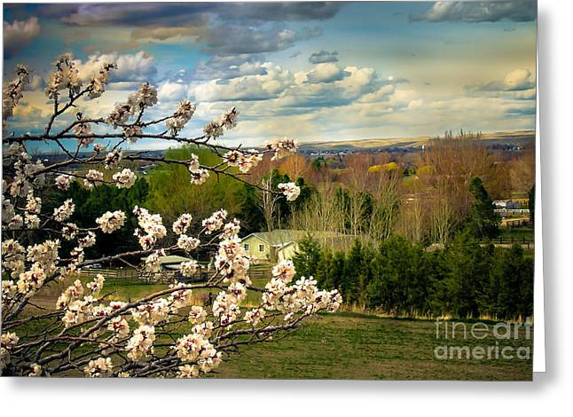 Haybales Greeting Cards - Spring Time Greeting Card by Robert Bales