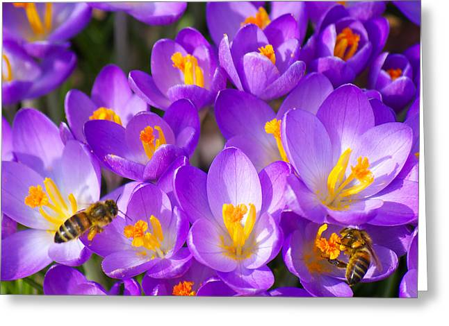 Angela Doelling Ad Design Photo And Photoart Greeting Cards - Springtime Greeting Card by Angela Doelling AD DESIGN Photo and PhotoArt