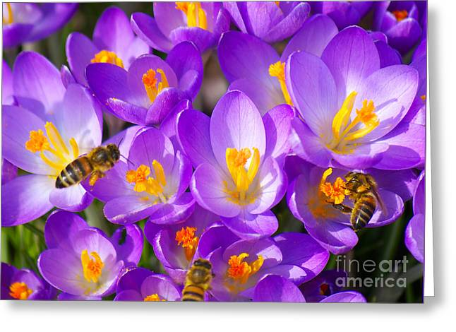 Springtime Greeting Card by Angela Doelling AD DESIGN Photo and PhotoArt