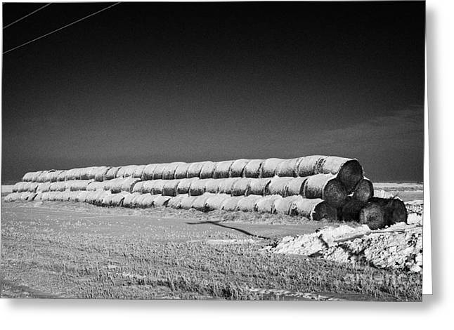 Harsh Conditions Greeting Cards - stack of frozen snow covered hay bales in a field Forget Saskatchewan Canada Greeting Card by Joe Fox