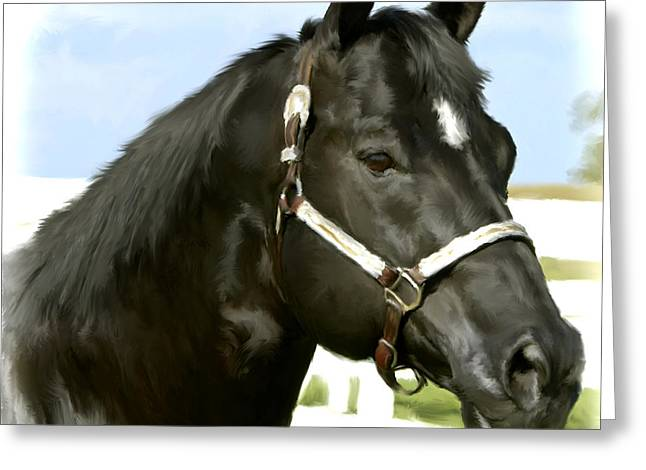 Yearling Greeting Cards - Stallion Greeting Card by Paul Tagliamonte