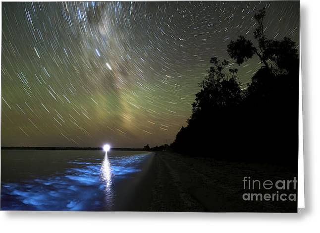 Luminescence Greeting Cards - Star Trails And Bioluminescence Greeting Card by Philip Hart