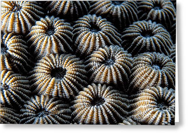 Asien Greeting Cards - Stony Coral Greeting Card by Joerg Lingnau