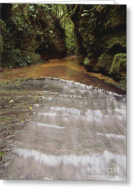 Water Flowing Greeting Cards - Stream In Rainforest Greeting Card by Art Wolfe