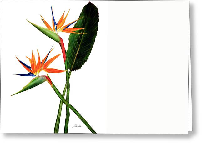 Strelitzia Paintings Greeting Cards - Bird of Paradise Greeting Card by Sue Sill