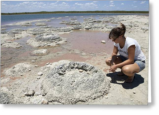 Bacteria Greeting Cards - Stromatolites, Australia Greeting Card by Science Photo Library