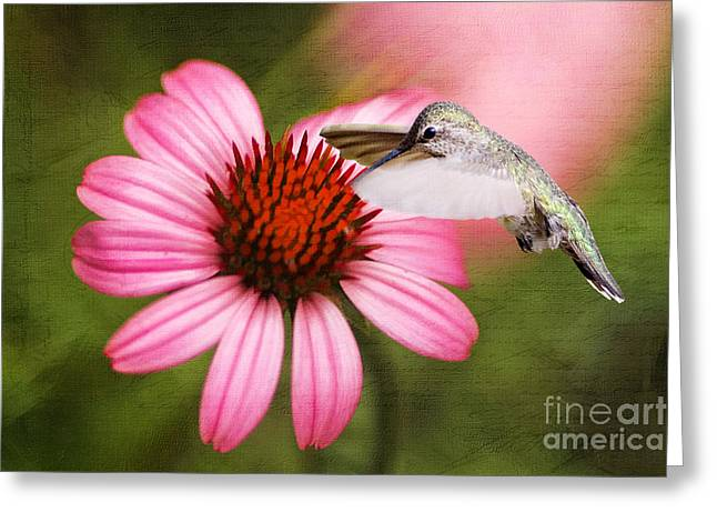 Hungry Fly Greeting Cards - Summer Grace Greeting Card by Darren Fisher