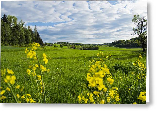 Vale Greeting Cards - Summer Meadow Greeting Card by Mountain Dreams