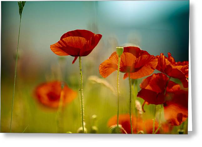 Corn Greeting Cards - Summer Poppy Greeting Card by Nailia Schwarz