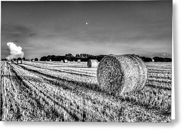 Farmers Field Greeting Cards - Summers evening farm Greeting Card by David Pyatt
