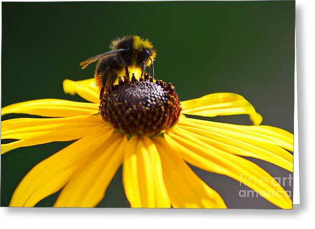 Yellow Coneflower Greeting Cards - Summertime Greeting Card by Angela Doelling AD DESIGN Photo and PhotoArt