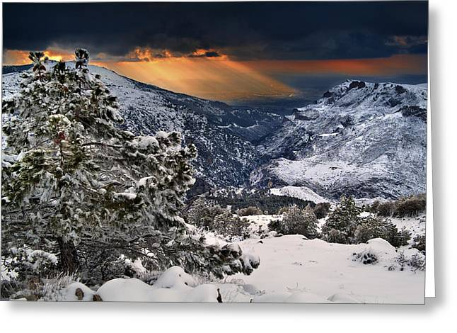 Sun Rays Greeting Card by Guido Montanes Castillo