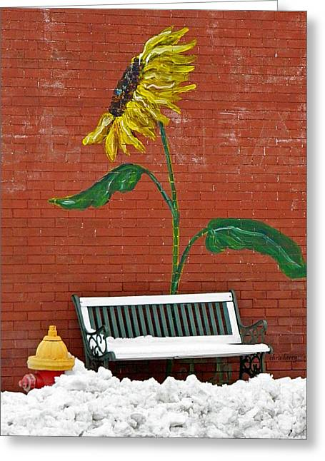 Sunflower And Snow Greeting Card by Chris Berry