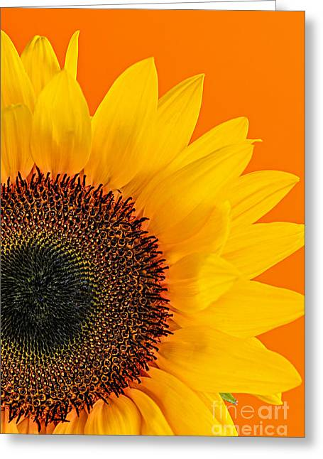 Colorful Blooms Greeting Cards - Sunflower closeup Greeting Card by Elena Elisseeva