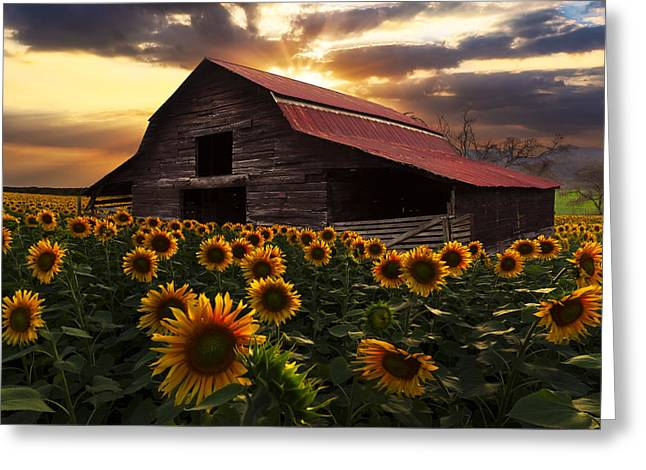 Red Roof Photographs Greeting Cards - Sunflower Farm Greeting Card by Debra and Dave Vanderlaan